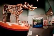 mastodon found in dunnellon